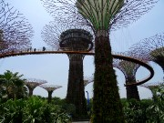 333  Gardens by the Bay.JPG